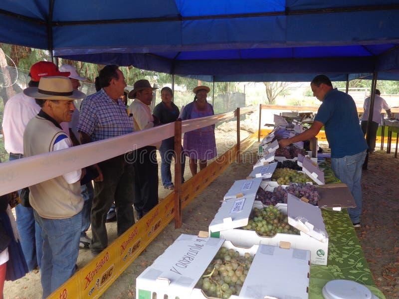 Validação de vinhos e de Singanis das uvas fotografia de stock