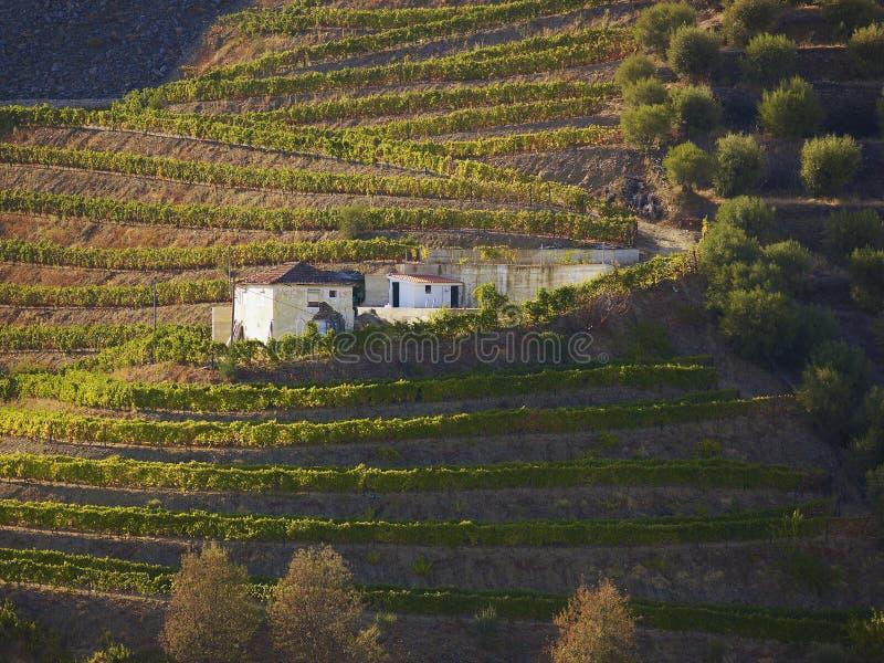 Vallée 3 de vin gauche photos stock