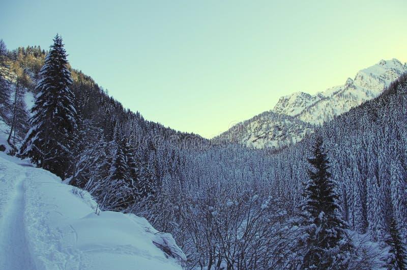 Vallée alpestre image stock