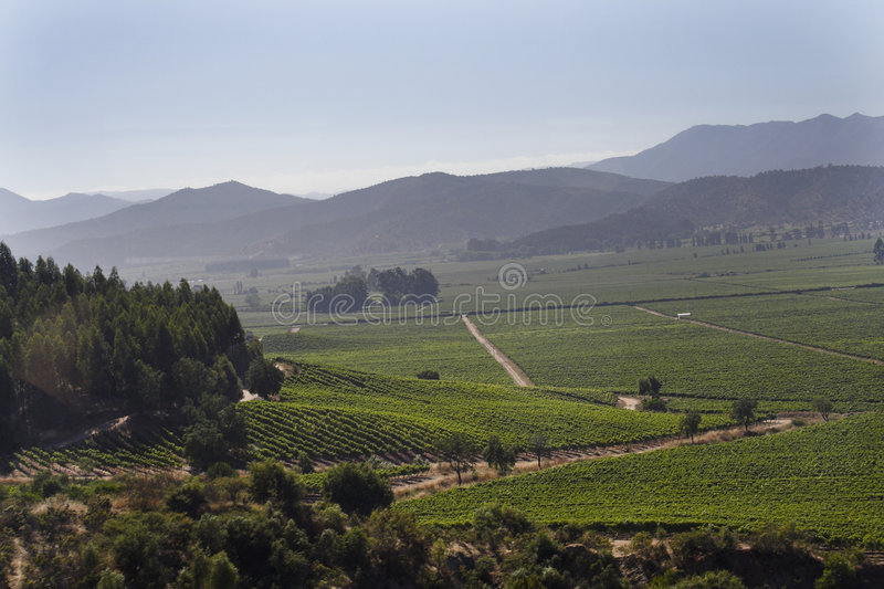 Vallée Chili de vin de Casablanca photo libre de droits