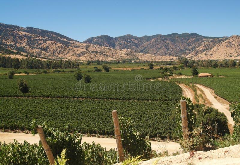 Vallée complètement des vignobles, Chili, Amérique du Sud photographie stock
