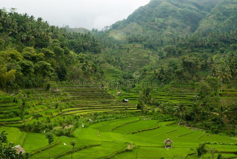 Vallée de Bali images libres de droits