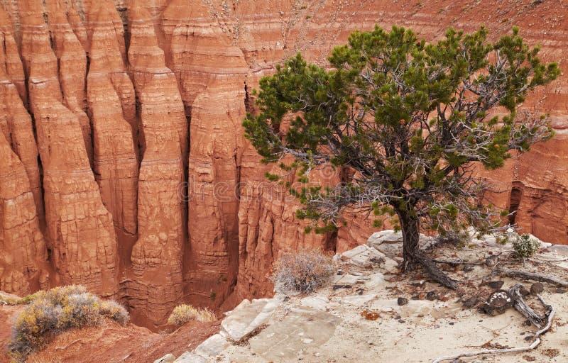 Vallée de cathédrale, parc national de récif de capitol, Etats-Unis image stock