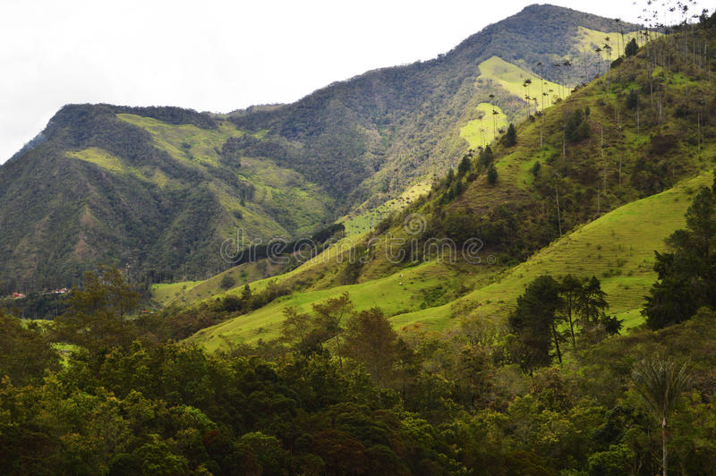 Vallée de Cocora en Colombie photos libres de droits