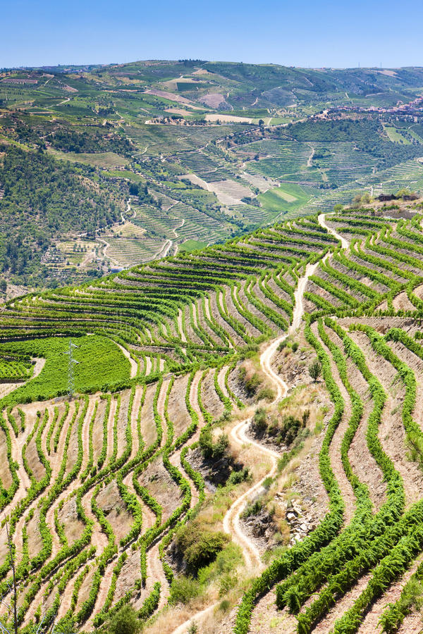 Vallée de Douro photographie stock libre de droits