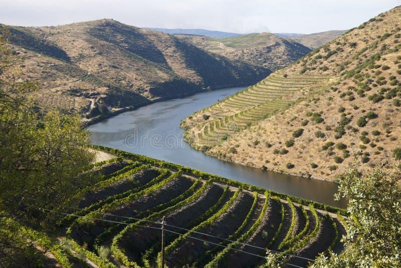 Vallée de Douro images stock