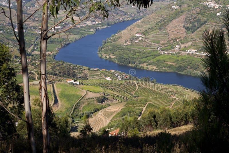 Vallée de Douro photographie stock