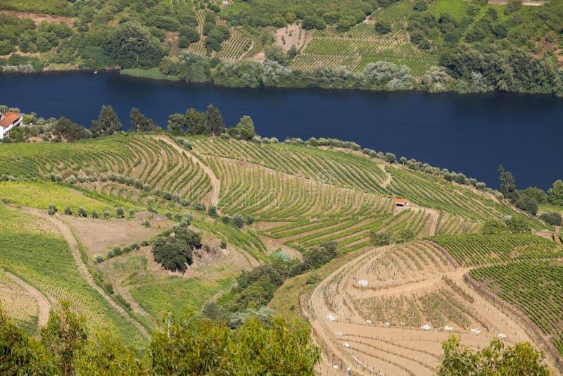Vallée de Douro photos libres de droits