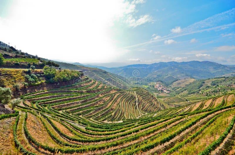 Vallée de Douro : Vignobles près de rivière de Duero autour de Pinhao, Portugal photo stock
