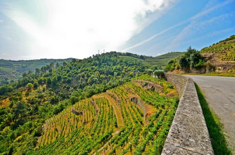 Vallée de Douro : Vignobles près de rivière de Duero autour de Pinhao, Portugal images stock