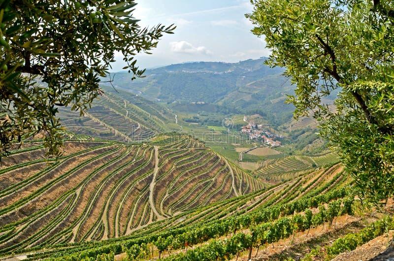 Vallée de Douro : Vignobles près de rivière de Duero et de Pinhao, Portugal photo libre de droits