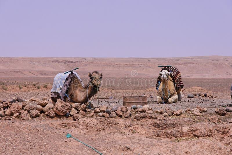 Vallée de Draa près d'Ouarzazate en M image stock