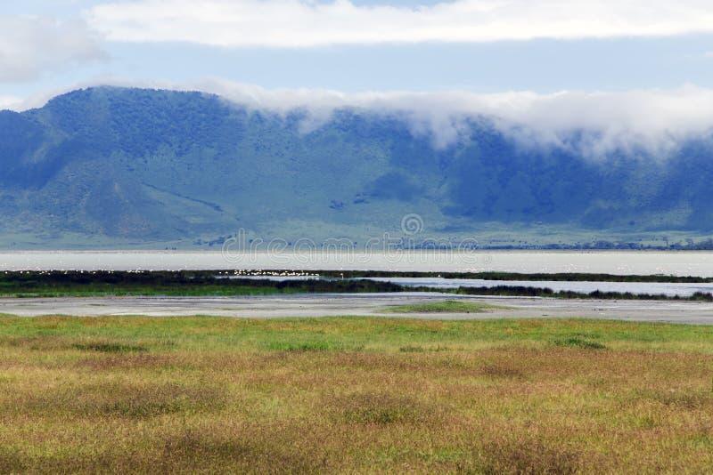 Vallée de floraison dans la région de conservation de cratère de Ngorongoro photo stock