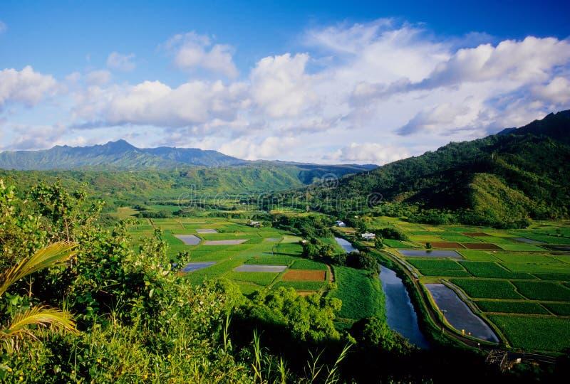 Vallée de Hanalei photographie stock libre de droits