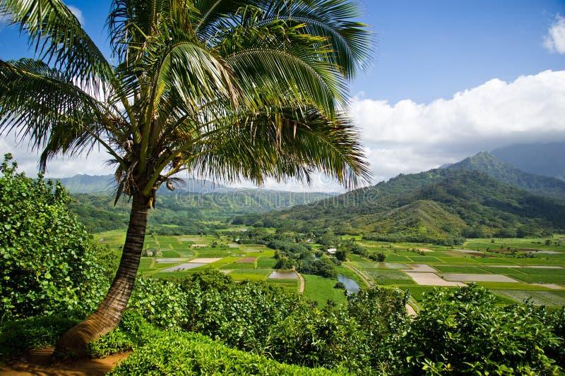 vallée de Kauai de hanalei photos libres de droits
