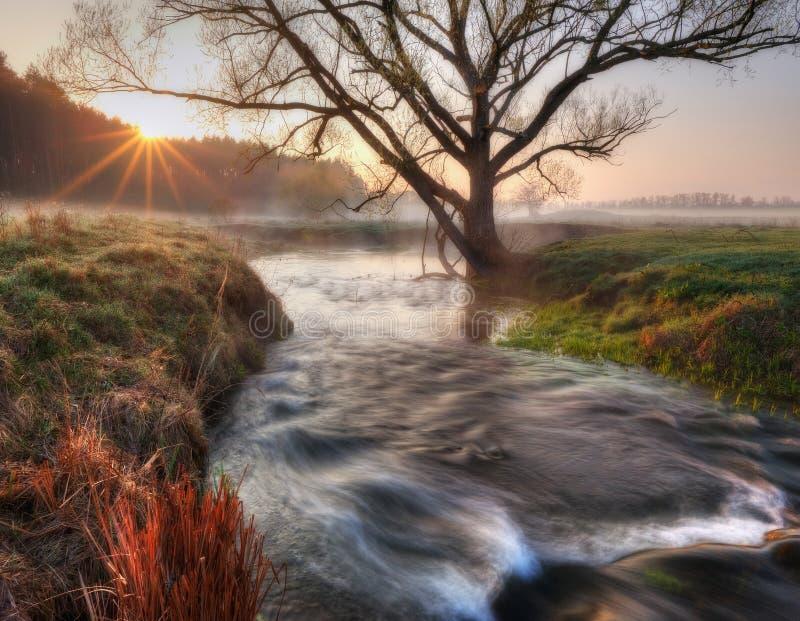 Vallée de matin de ressort de la rivière pittoresque Aube brumeuse photo stock