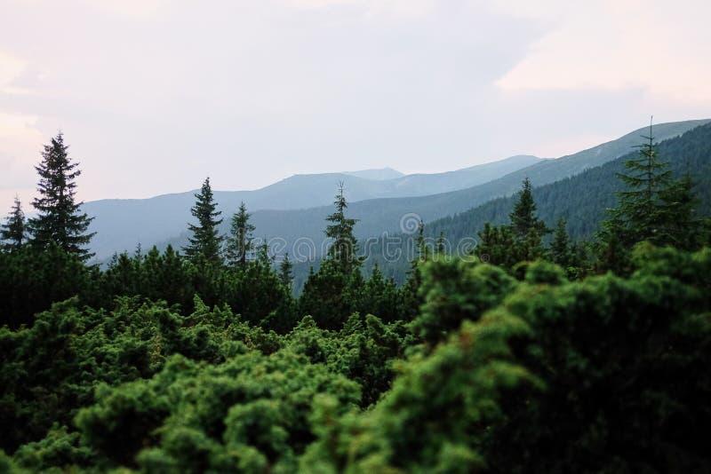 Vallée de montagne à la journée aménagez l'été normal Paysage coloré d'été dans les montagnes carpathiennes photos stock