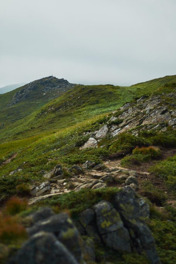 Vallée de montagne à la journée aménagez l'été normal Paysage coloré d'été dans les montagnes carpathiennes images stock
