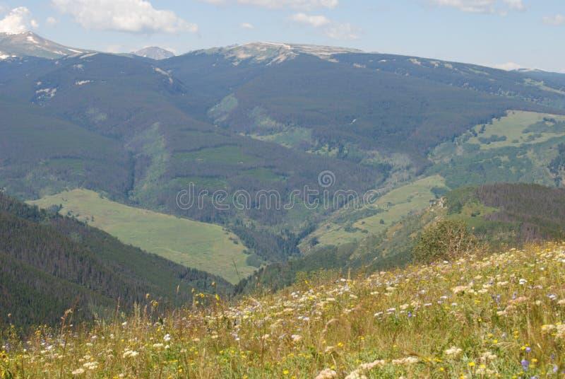 Vallée de montagne d'été du Colorado images libres de droits