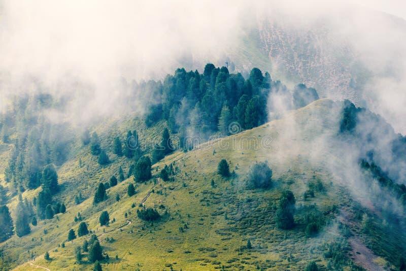Vallée de montagnes de Val Gardena avec l'herbe verte et les arbres photographie stock