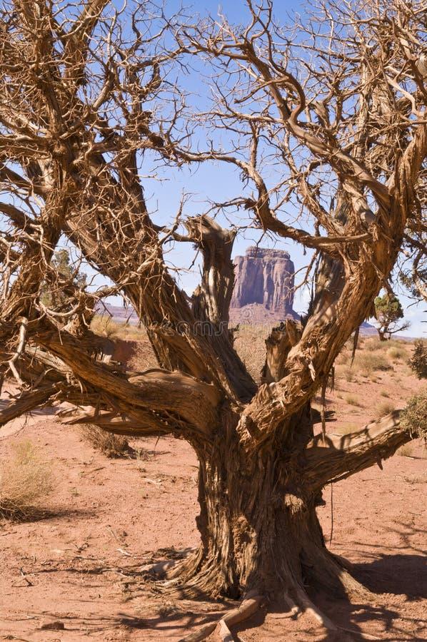 Vallée de monument d'arbre photo stock