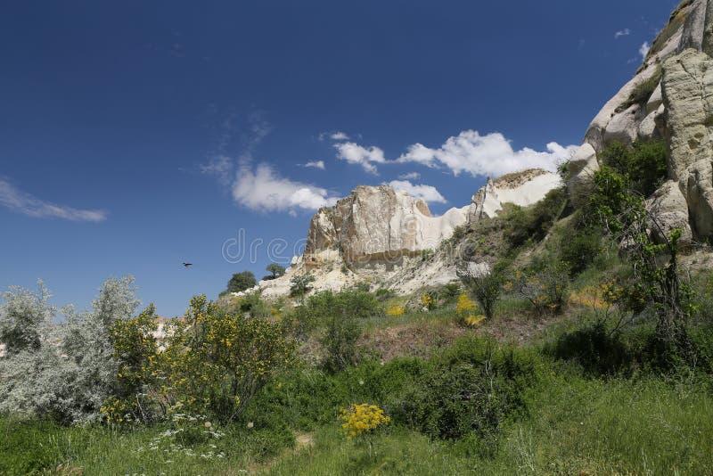 Vallée de pigeons dans Cappadocia photos libres de droits