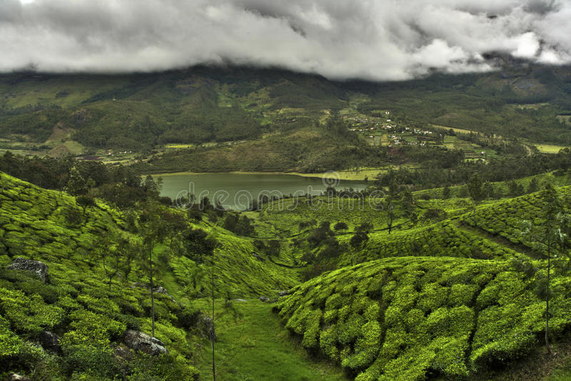 Vallée de plantation de thé images stock