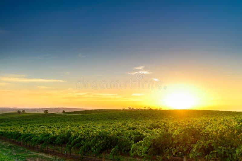 Vallée de vin photos stock