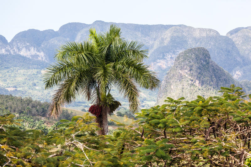 Vallée de Vinales, Cuba, image libre de droits