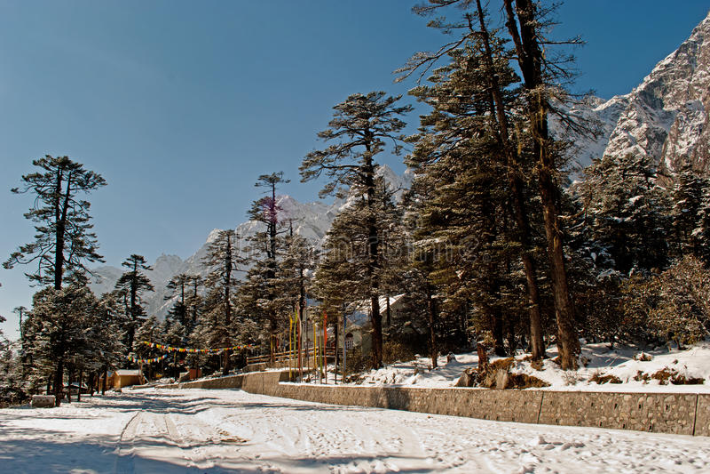 Download Vallée de Yumthang image éditorial. Image du himalaya - 56475550