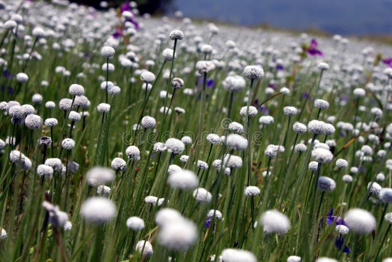 Vallée des fleurs images libres de droits