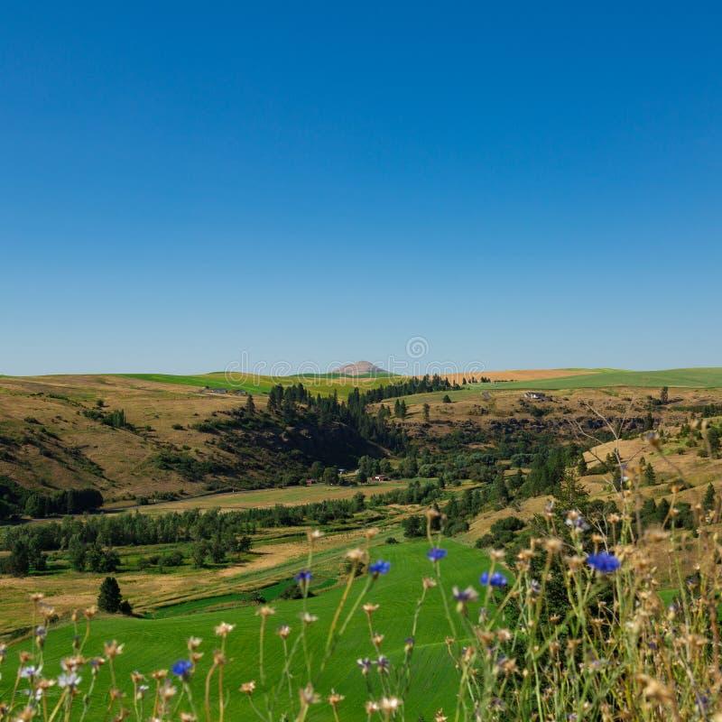 Vallée Flora avec la butte de Steptoe dans la distance photos stock