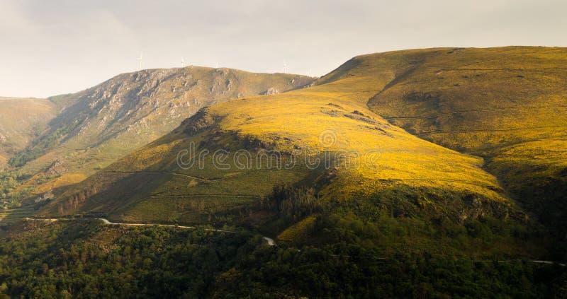 Vallée jaune de montagne photo libre de droits