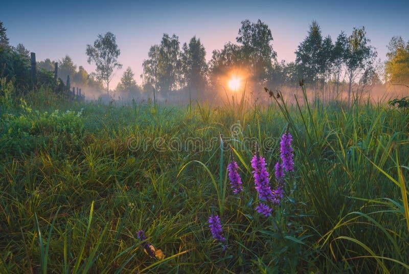 Vallée lumineuse de matin photos libres de droits