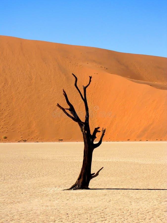 Vallée morte photo libre de droits