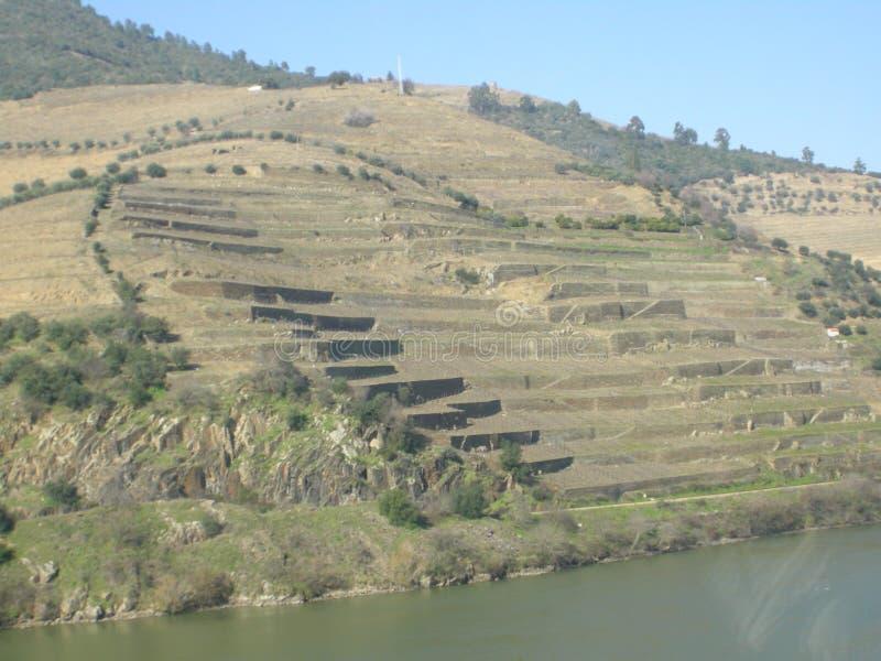 Vallée portugaise de Douro de terrasses image stock