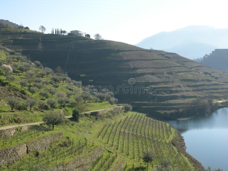 Vallée portugaise de Porto Douro de terrasses de winelands photos libres de droits