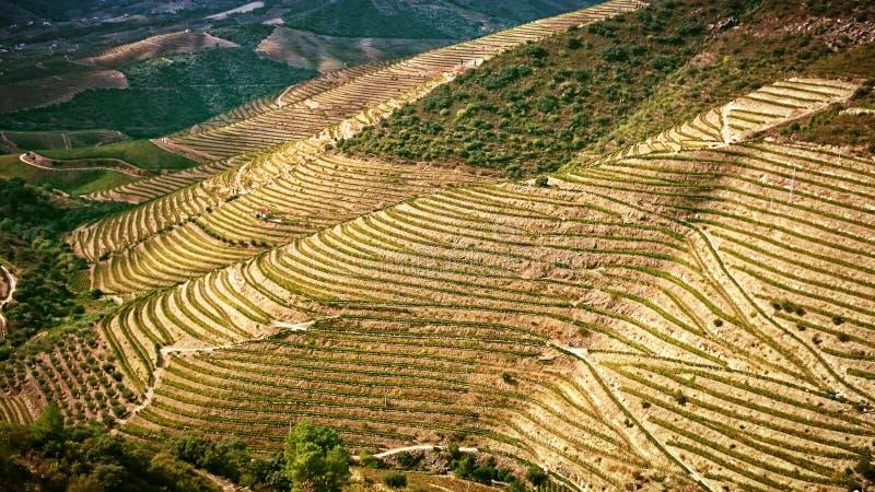 Vallée splendide de Douro image stock