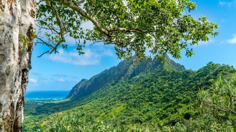 Vallée tropicale de Kaaawa photographie stock libre de droits