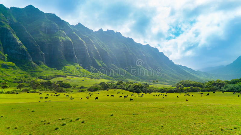 Vallée tropicale de Kahana photographie stock