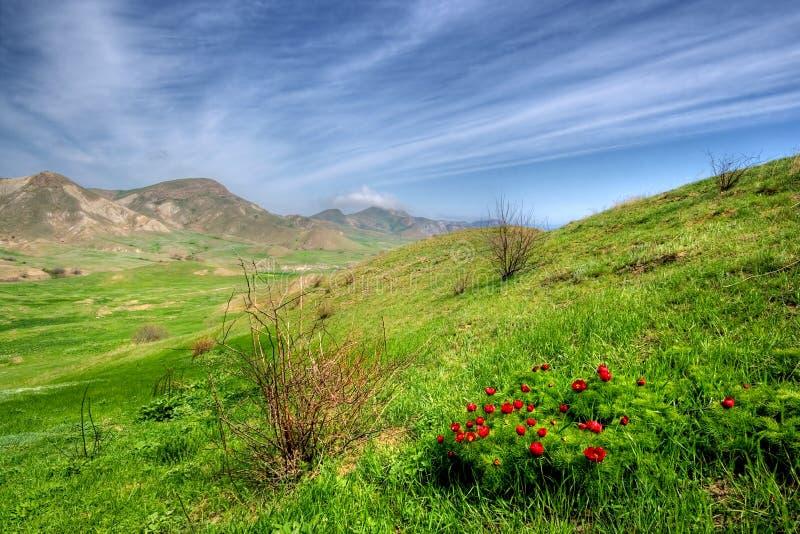 Vallée verte avec les fleurs sauvages images libres de droits