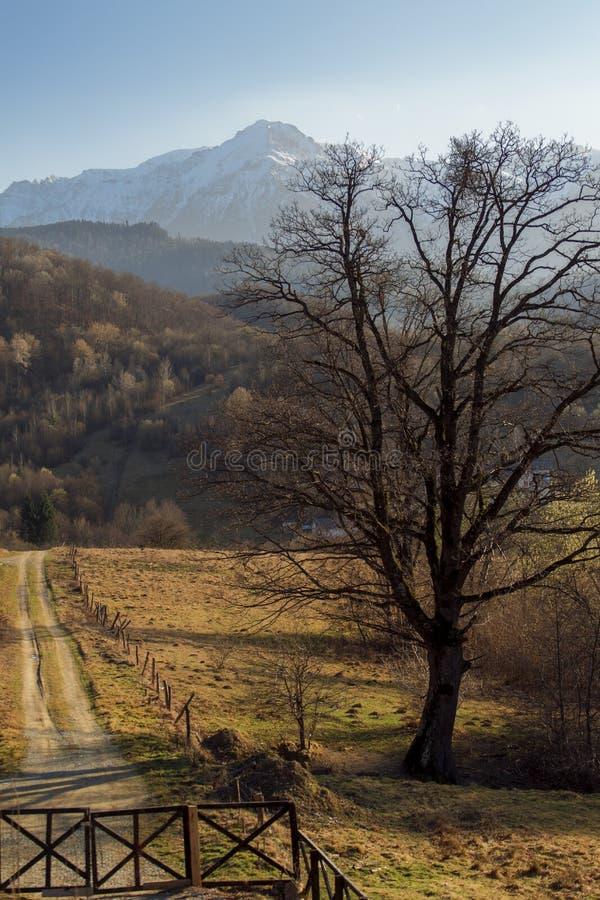 Vallée verte dans Cheile Gradistei photo stock