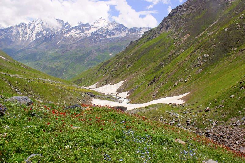 Vallées fleurissantes colorées de glacier Himachal Pradesh photos stock