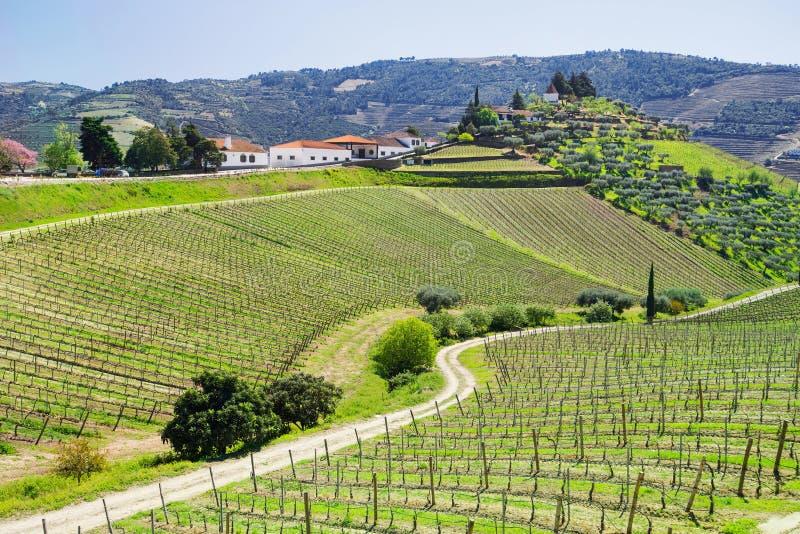 Vall?e de Douro Vignobles et paysage près de ville de Pinhao, Portugal photos libres de droits