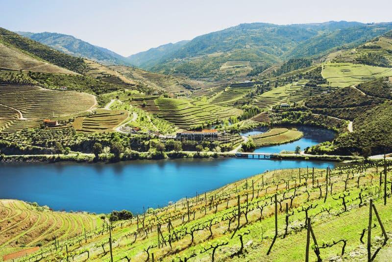 Vall?e de Douro Vignobles et paysage pr?s de ville de Pinhao, Portugal photographie stock