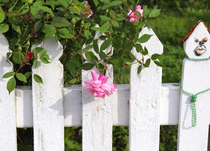 Valla de estacas blanca y Rose rosada imagen de archivo