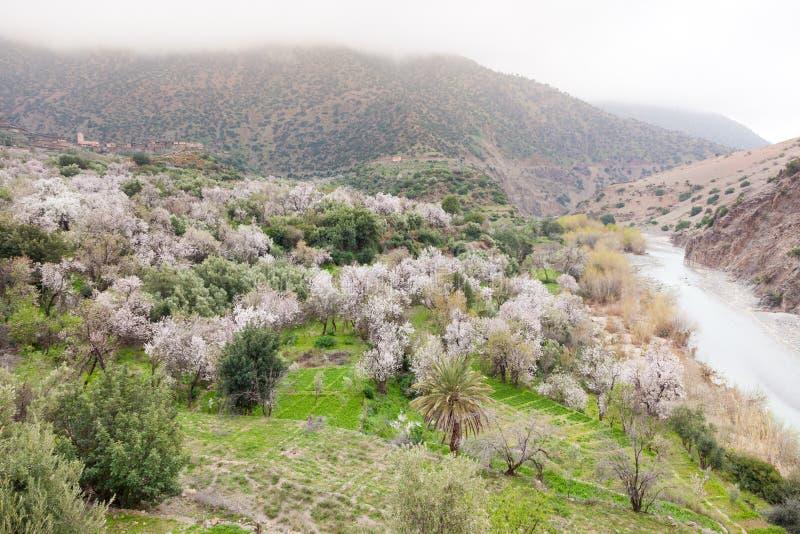 Valle africano del norte de la montaña en primavera foto de archivo libre de regalías