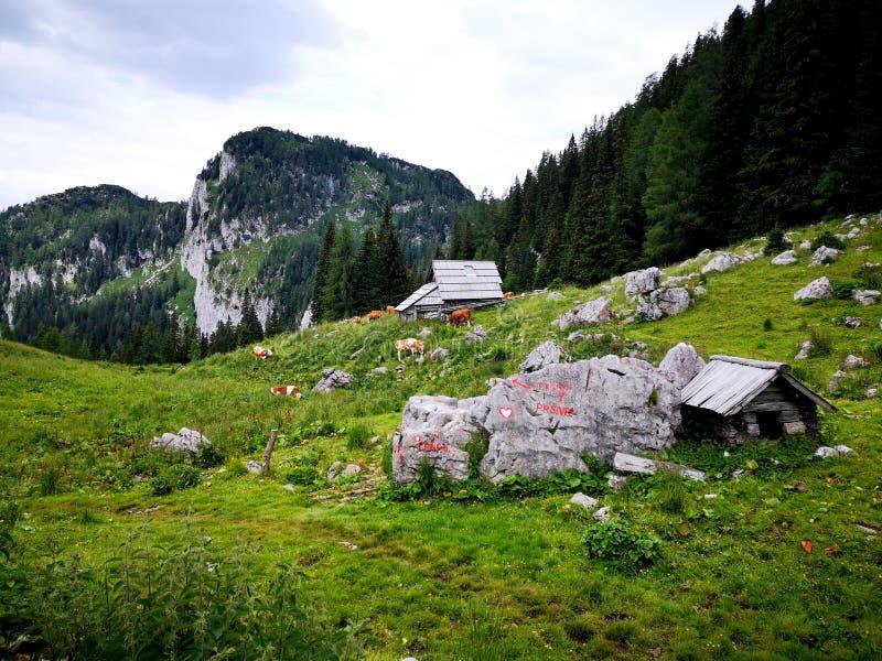 Valle alpino pacífico hermoso en montañas eslovenas fotografía de archivo