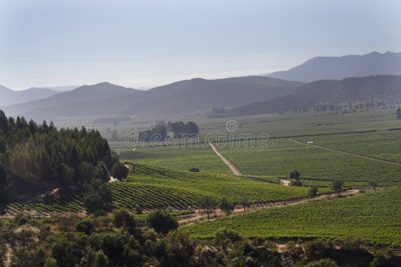 Valle Chile del vino de Casablanca foto de archivo libre de regalías