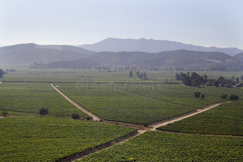 Valle Cile del vino di Casablanca fotografie stock libere da diritti